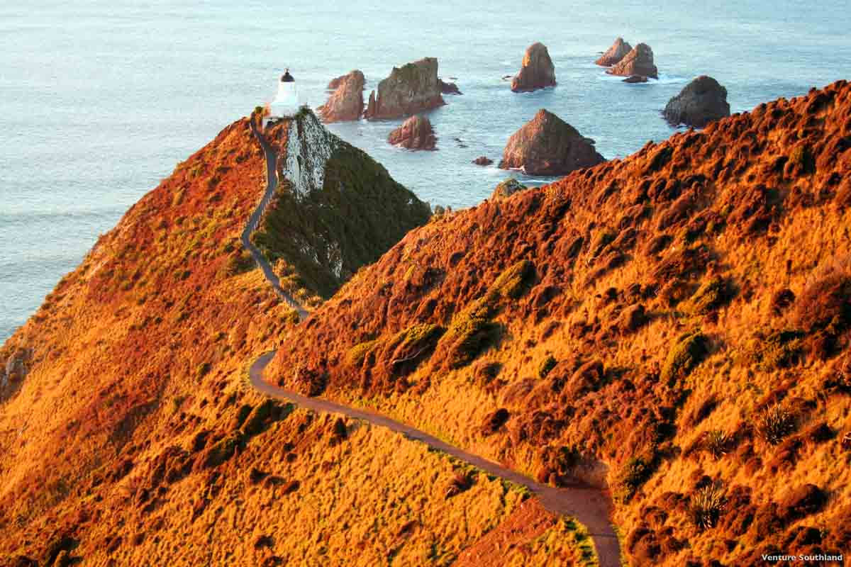 Neuseeland Südinsel Highlights Nugget Point
