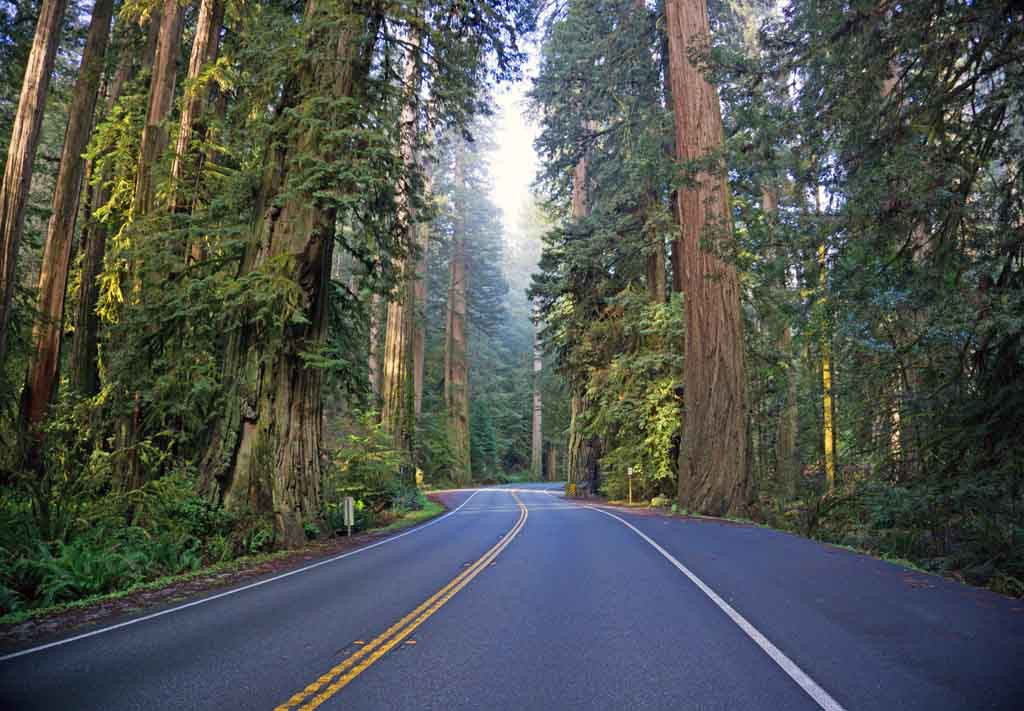 Beste Nationalparks USA Liste Redwood Nationalpark