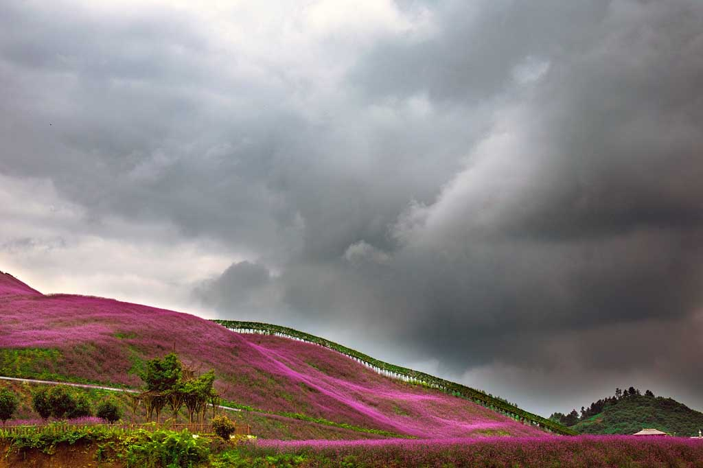 China Natur Blumenfelder Tonxi in Guizhou